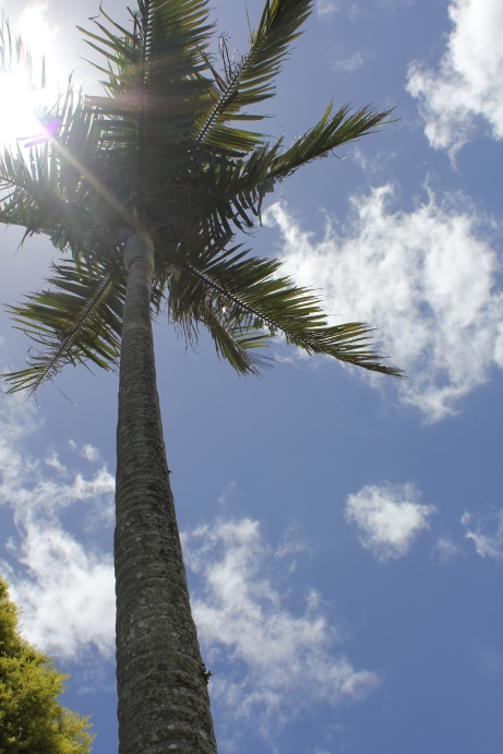Towering palm trees and a blue summer's sky!